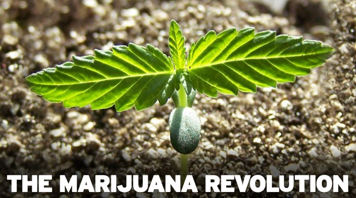 The Marijuana Revolution – Dr. Sanjay Gupta Reports