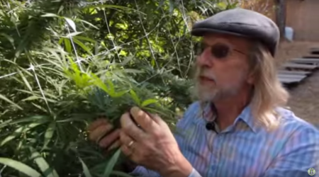 Grow Cannabis – The Green Giants of California