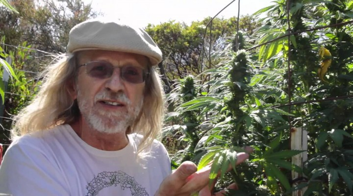 Jorge Cervantes: Humboldt Medical Marijuana (Part 1)